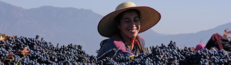 Apaltagua Vineyard Worker